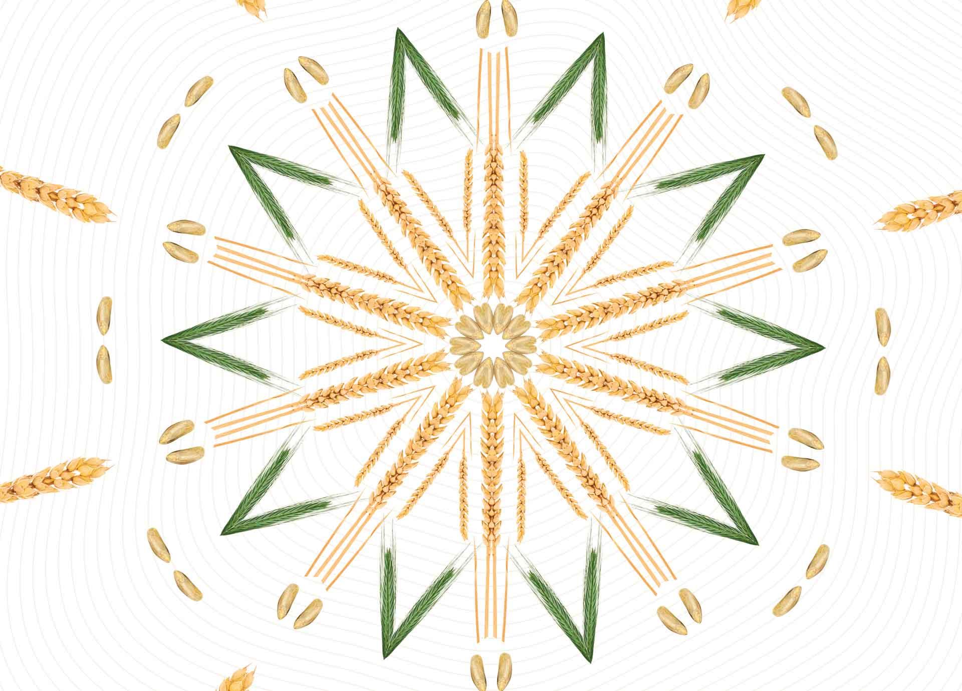 3_gero-apetito_PAKUOTES_kaleidoskopas_1920X1380-maz