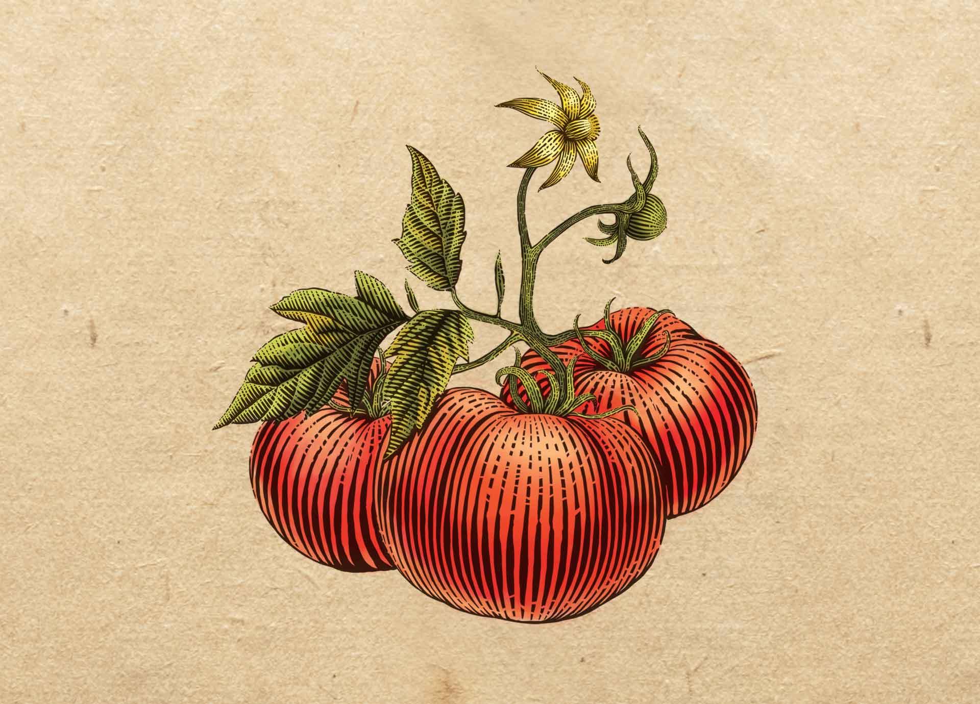pomidoras-maz
